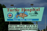Turtle hospital in Marathon FL